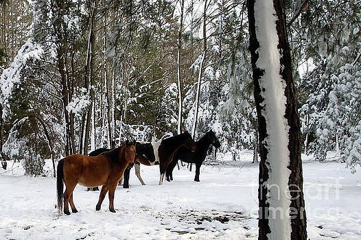 Horses in the snow by Vivian Cook