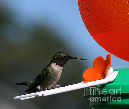 Humming Bird by Kathy DesJardins