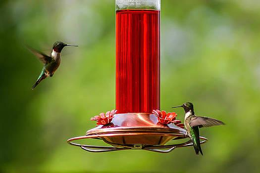 Humming Birds by Shey Stitt
