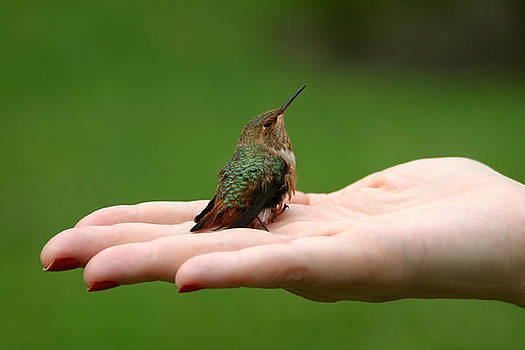 Hummingbird by Nino Via