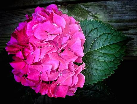 Hydrangea and Leaf by Mary Ann Southern