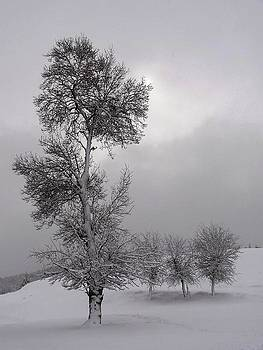 I love you snow Winter Scene by Faouzi Taleb