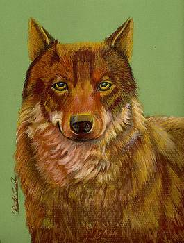 Canadian Red Wolf 2 by Ruth Seal