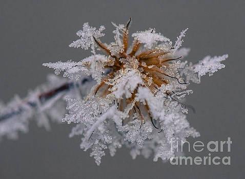 Ice Flower by Nicole Markmann Nelson