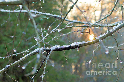 Icy Morning by Dawne Dunton