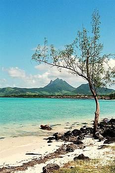 Ile aux Cerfs Mauritius by David Gardener