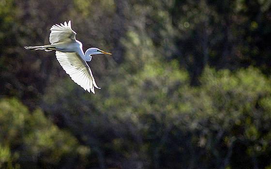 In flight by Bill LITTELL