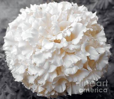 Pastel Hues by Ioanna Papanikolaou