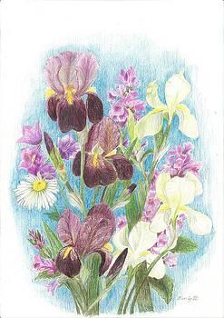 Iris by Eve-Ly Villberg