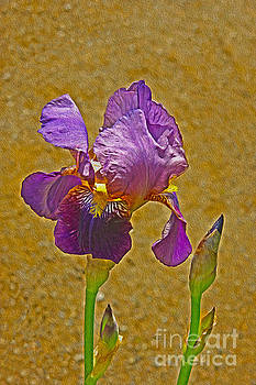 Iris flower by Nur Roy