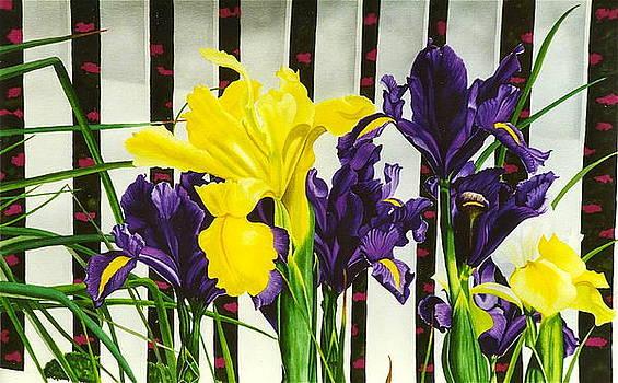 Iris Garden by Gael Graysen