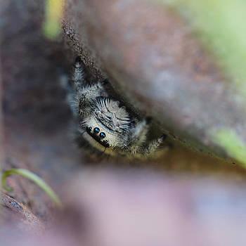 Itsy Bitsy Spider by Cristel Mol-Dellepoort