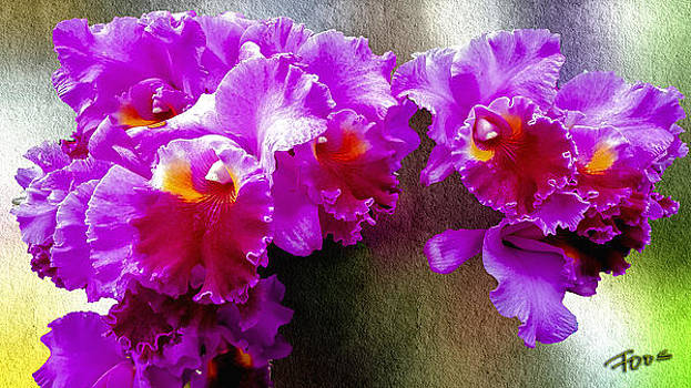 Joy To The World Orchid by Roy Foos
