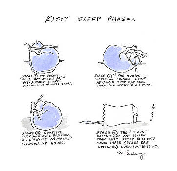 Kitty Sleep Phases by Molly Brandenburg