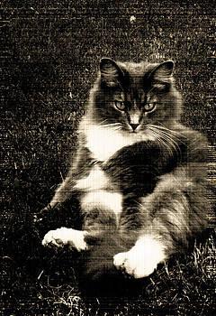 KittyKitty by Melissa Jones