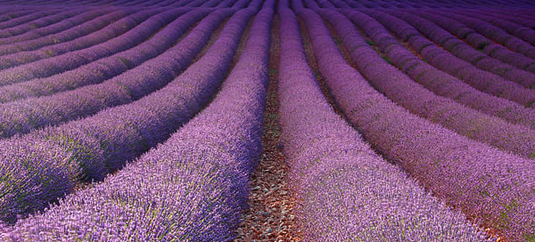 Lavender Sea by Marilar Irastorza