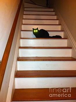 Lazer Eyed Kitty by Sherri Durrell