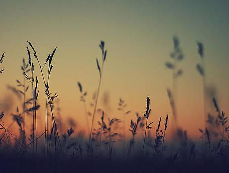 Lazy Summer Sunset by Patrick Horgan