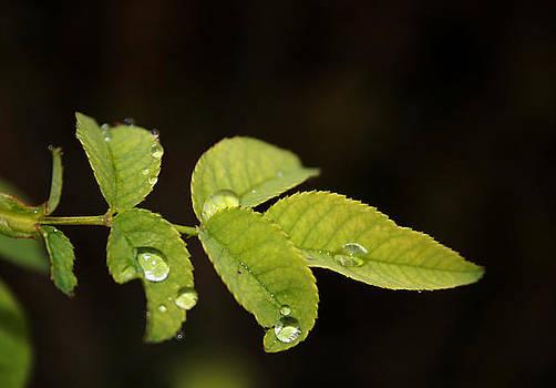 Leaf by Cora Brum