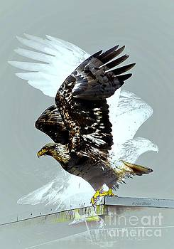 Leap Of Faith by Gail Bridger