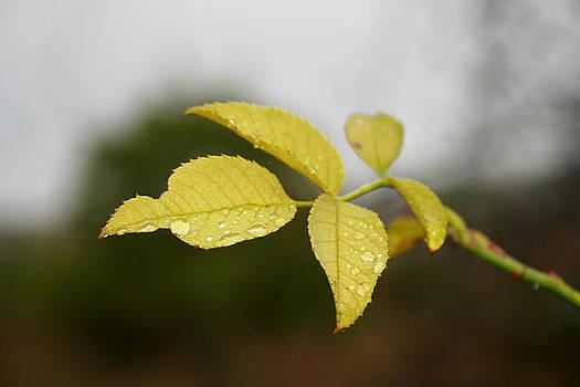 Leaves by Cora Brum