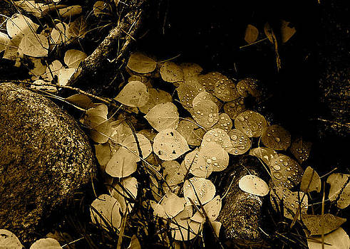 Leaves in Sepia by Cherie Haines