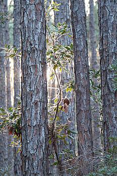 Light through the trees by Bill LITTELL