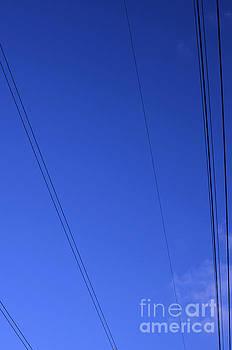 Lines by Paulo Simao