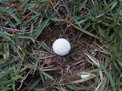 Little White Mushroom by Jenna Mengersen