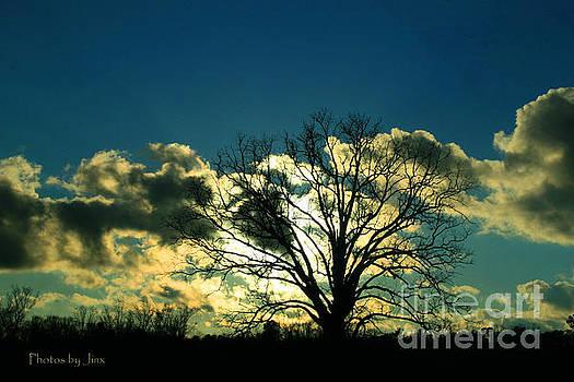 Lonely Tree.... by Jinx Farmer