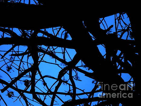 Looking up in the Woods by Melissa Miller