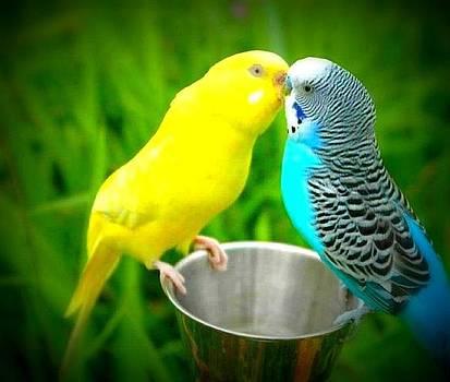 Lover birds by Yaa Hughes