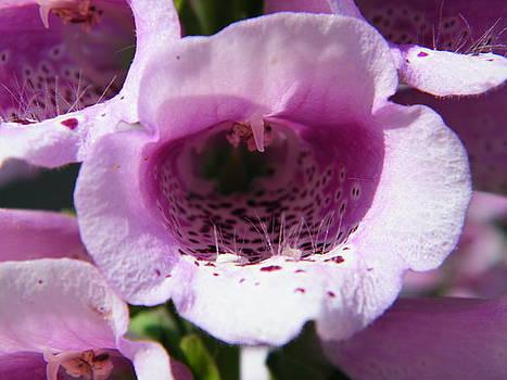 Macro Flower by Matthew Kay