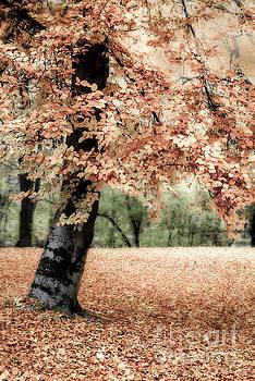 Magical Fall by Hannes Cmarits