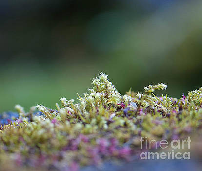 Magical Moss by Sarah Crites