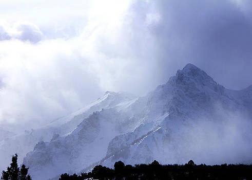 Majestic Mist by Marta Alfred