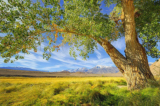 Majestic Tree Frames A Picturesque Scenic of the Sierra Nevadas by Kriss Russell