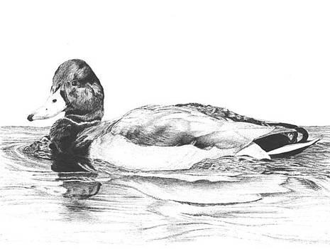 Mallard Duck by Reppard Powers