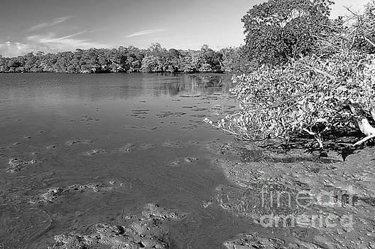 Mangrove Lake by Andres LaBrada