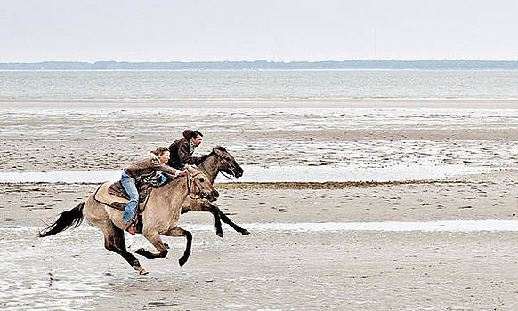 Marsh Tacky Race by Bill LITTELL