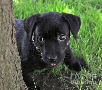 Matty Puppy by Jay Nodianos