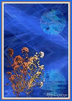 Midnight Flowers by Ray Tapajna