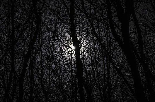 Midnight Rambling by Nick Field