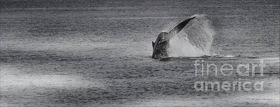 Minke Whale I by Gail Bridger