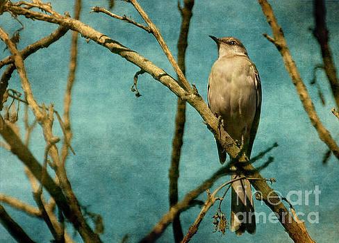 Mocking Bird by Zsuzsanna Szugyi