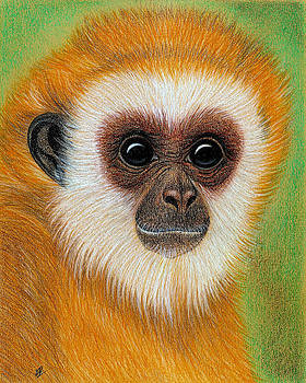 Monkey by Jo Prevost