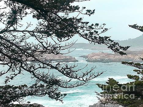 Monterey Bays Coastal View by DJ Laughlin