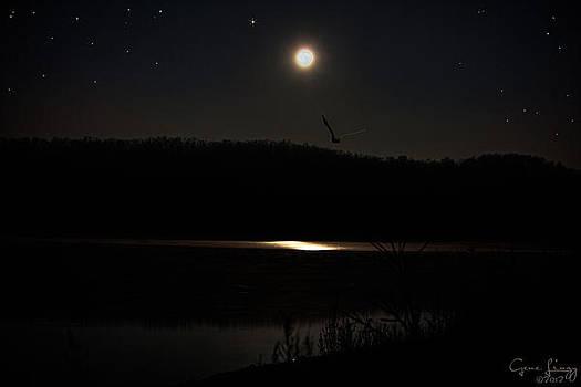 Moon Reflection in Lake by Gene Linzy
