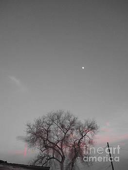 Moon Rising by Nickey Brumbaugh