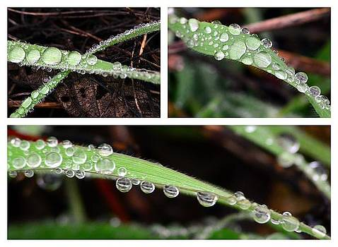 Morning Dew Collection by Don Herd